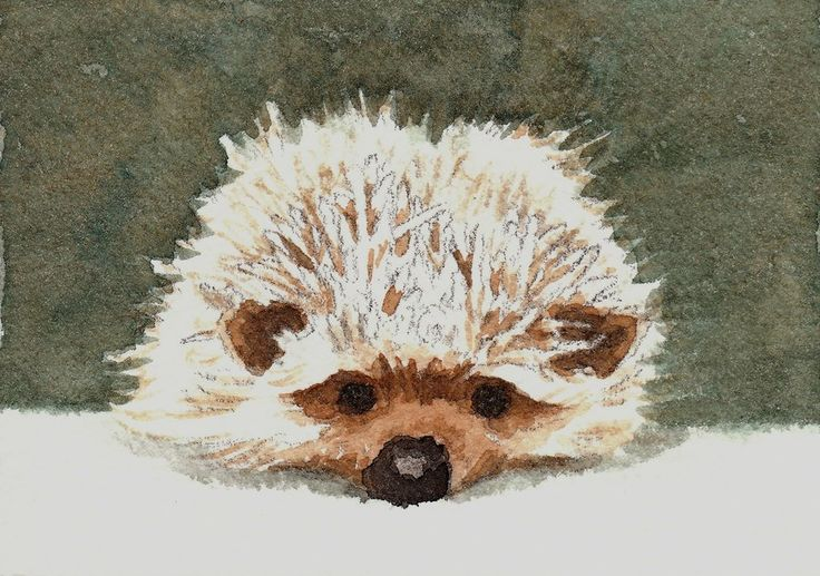 Hedgehog ATC by *waughtercolors on deviantART