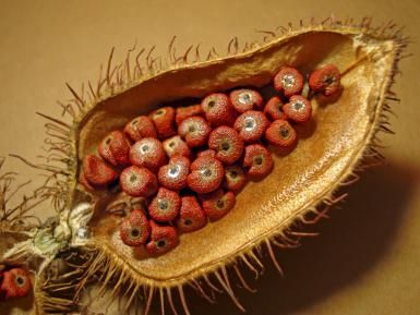 Simple Caribbean Achiote Oil for Yellow Rice