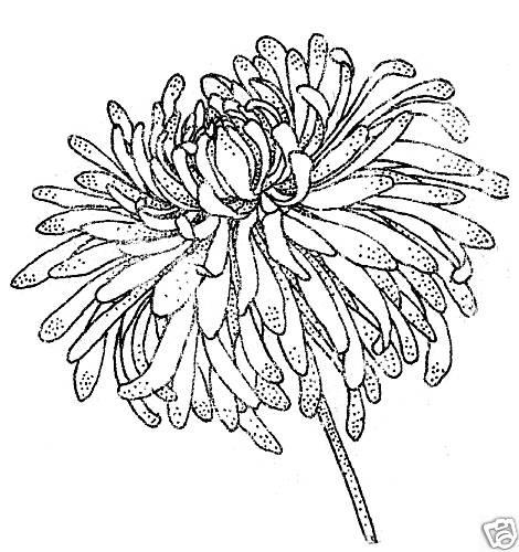 работы благоустройству контурные картинки хризантемы этот