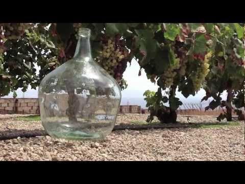 #Enoturismo en Bodega Contiempo #Wine #Tourism