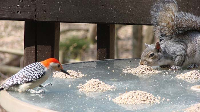 If you've got bird feeding questions, we've got answers! Learn how to discourage starlings, keep squirrels away from your bird feeders, find the best bird seed options and more!