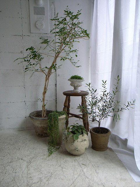 Plants /Garden : Antique Furniture demode10