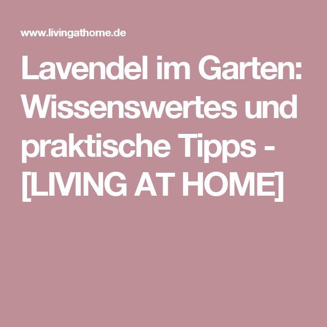 Lavendel im Garten: Wissenswertes und praktische Tipps - [LIVING AT HOME]