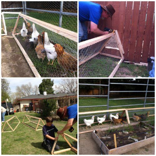 How To Make A Chicken Tunnel | Build your own chicken tunnel and create an effective and versatile way for your chickens to move around your homestead.
