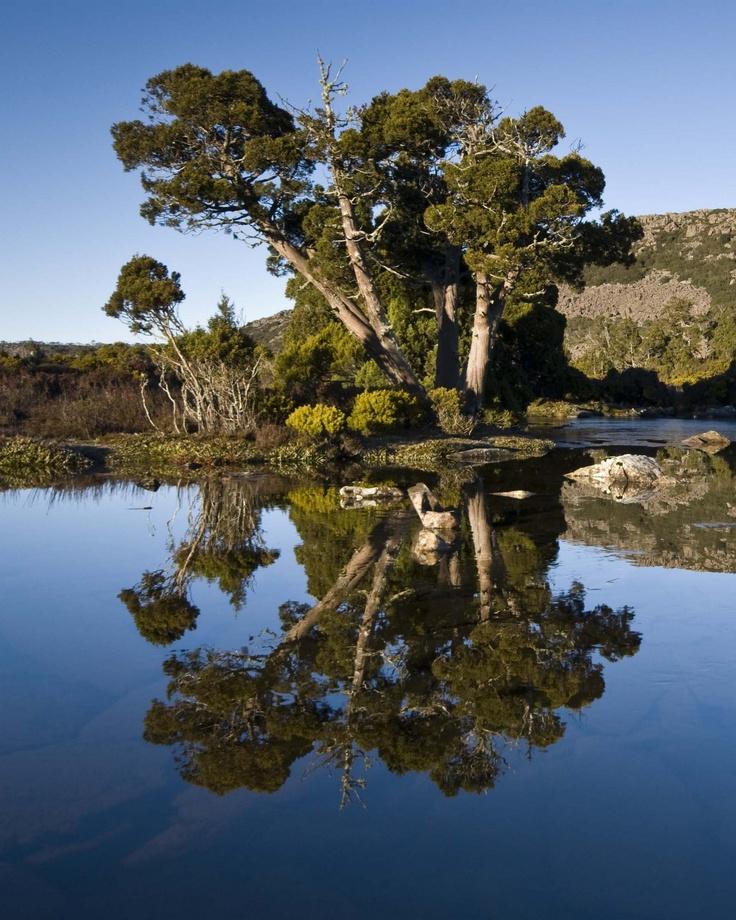 Pine lake, Tasmania. | Pine lake, Nature inspiration ...