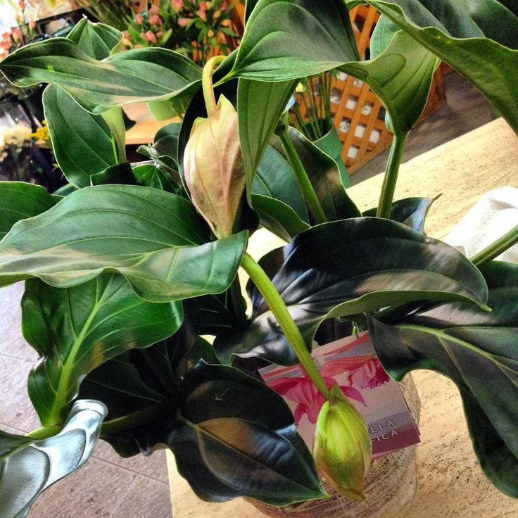 Oltre 25 fantastiche idee su piante da appartamento su for Arredatori di giardini