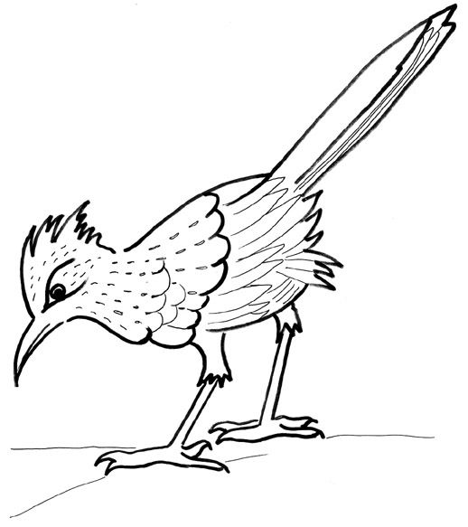 pinon tree coloring pages | 29 best roadrunner patterns images on Pinterest | Gourd ...