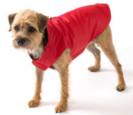 An NYC dog needs a raincoat, it's just a fact.