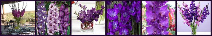 Types of Purple Flowers | Purple Flowers | Types of Purple Flowers | Names of Purple Flowers ...