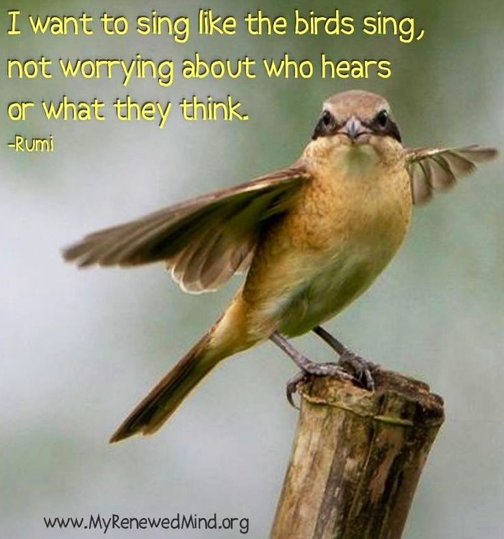 Bird Sayings Phrases Daily Inspiration Quotes
