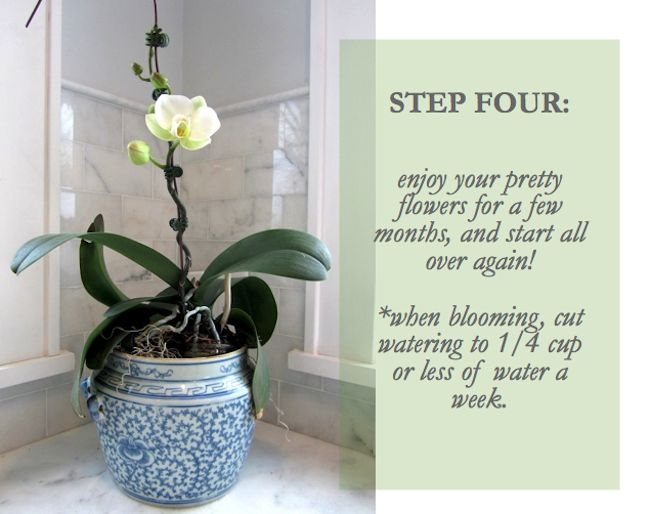 Keeping your orchids blooming