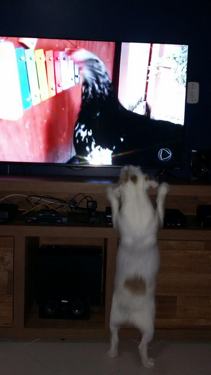 Elvis assistindo tv