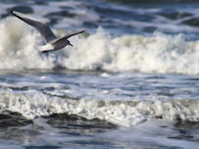 O voce din mulţime: Mirajul mării