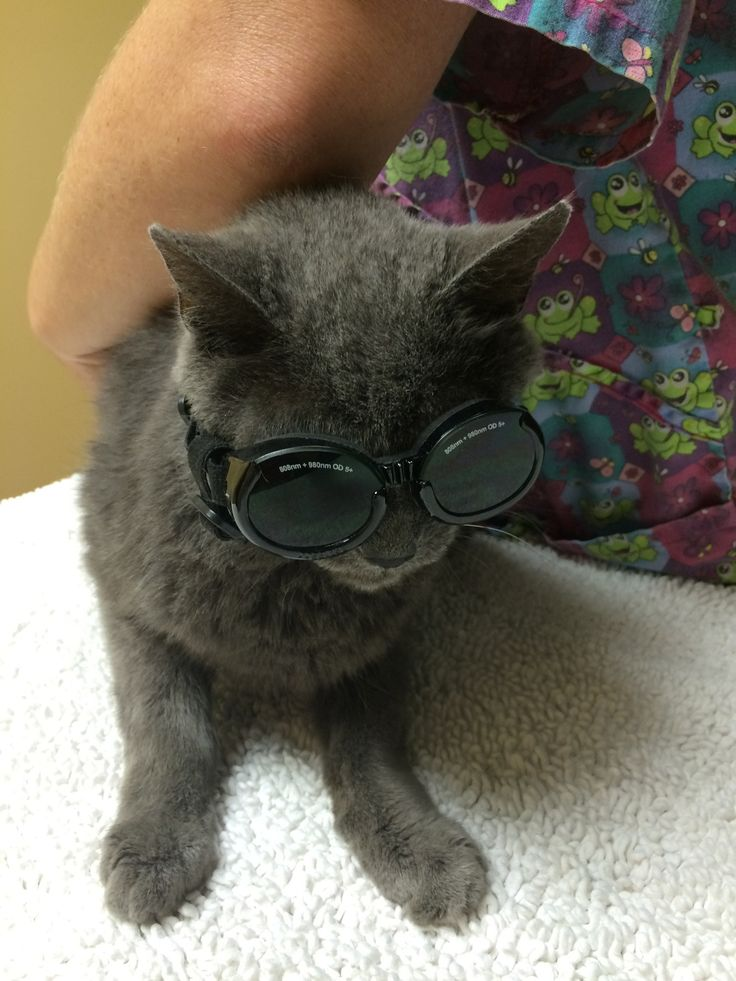 He needed a little laser surgery on his hip, so he had to wear protective eyewear - Imgur