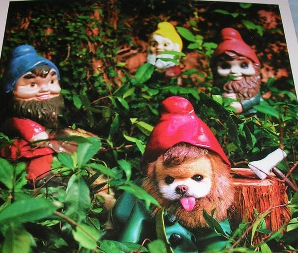 Winkle?: Lol Mr Winkl, Fun Finding, Totally Cuteness Animal, God Greatest, Greatest Creations, Garden Gnomes, Gardens Gnomes, Winkles Y, Pet Bad