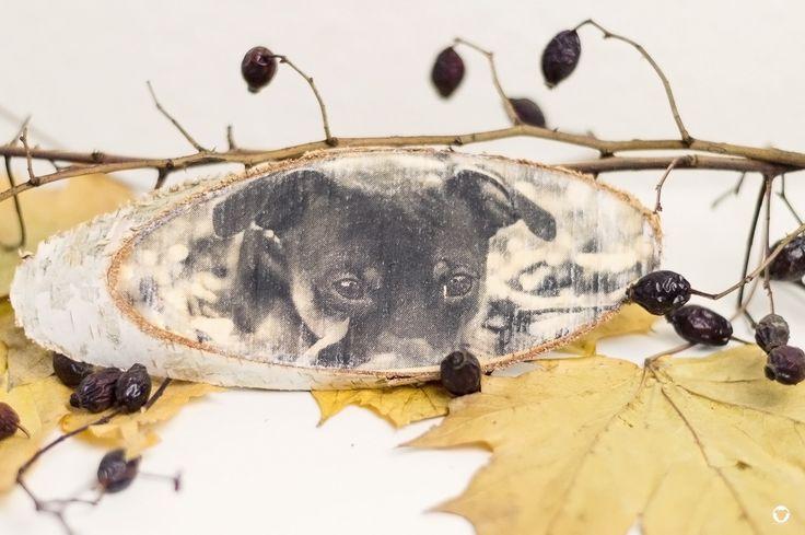[DIY   FOTO TRIFFT HOLZ] #selbstgemacht #fotografie #fototransferpotch #PinscherBuddy ©Melody M. Bayer Fotografie   BUDDY&ME
