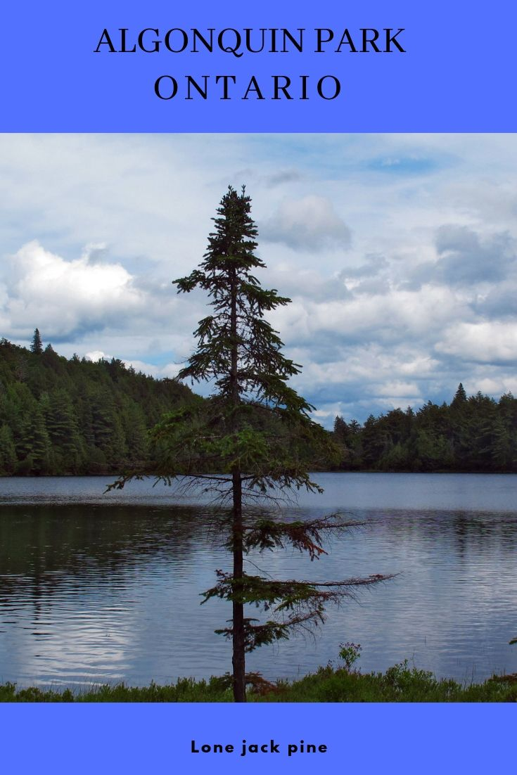 The Call Of The Wild Algonquin Park With Images Algonquin