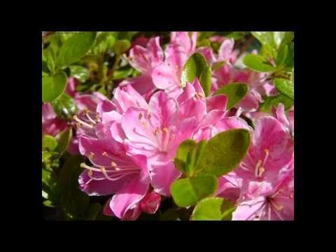 Skaldowie - Wiosna - YouTube