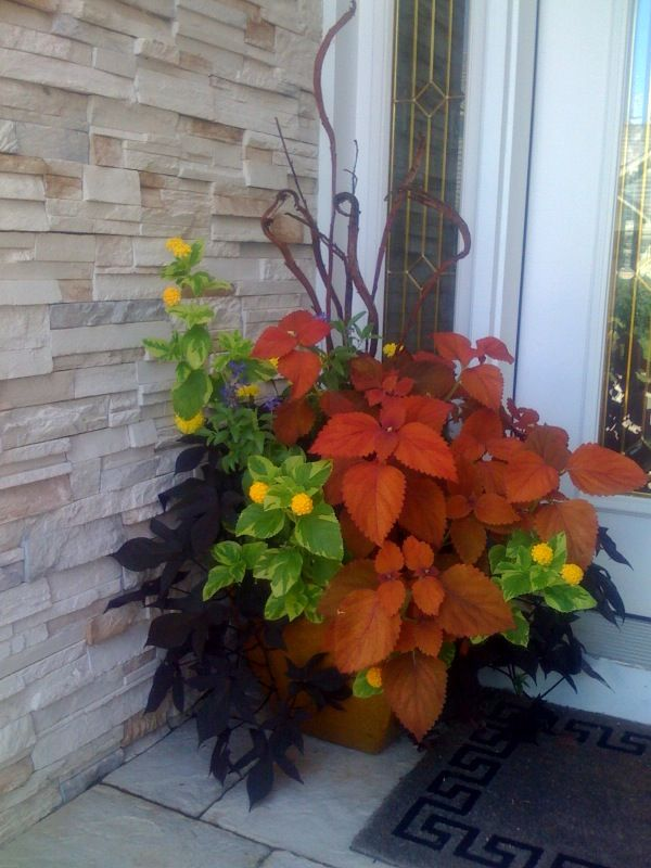 Coleus, variegated lantana, purple potato vine, and flat willow branches makes great contrasting colors!