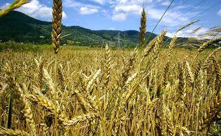 """Κήπος Στα Μεσόγεια: """"Η Ελλάδα δεν έχει επαρκή παραγωγή τροφίμων"""". Ας δ..."""