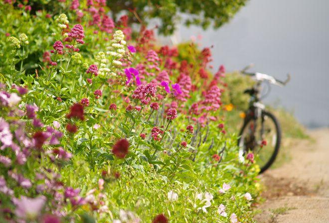 дорога, велосипед, цветы