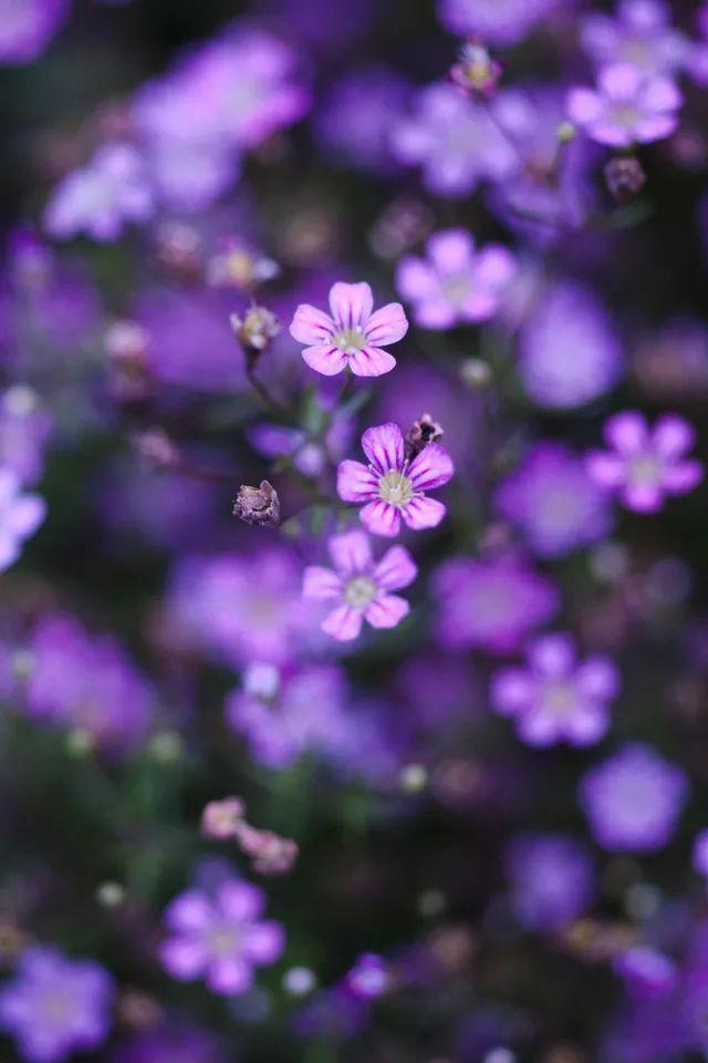 Purple flower #iPhone #4s #Wallpaper http://iphonetokok-infinity.hu http://galaxytokok-infinity.hu http://htctokok-infinity.hu