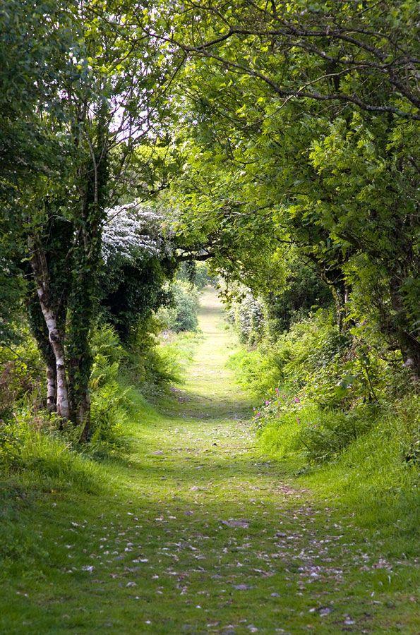 Tree tunnel, Kit Hill near Callington, Cornwall, England