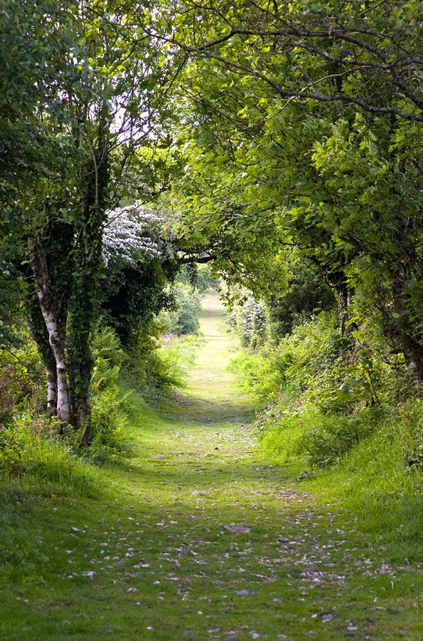Tree tunnel, Kit Hill near Callington, Cornwall, England