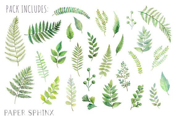 Watercolor Ferns Clipart Forest Leaves Clipart Greenery Leaf Branches And Stems Wedding Invitation Clip Art Instant Download Pngs Pflanzen Tattoo Farn Blumenzeichnung