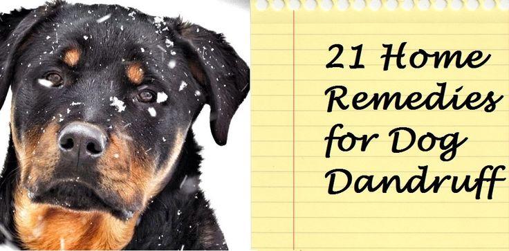 21 Home Remedies for Dog Dandruff