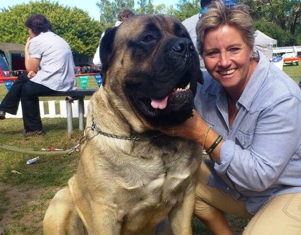 maiores raças de cães do mundo Boerboel