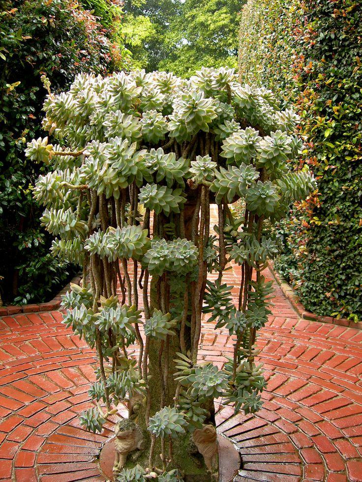 succulent planter (graptopetalum paraguayense in it?)