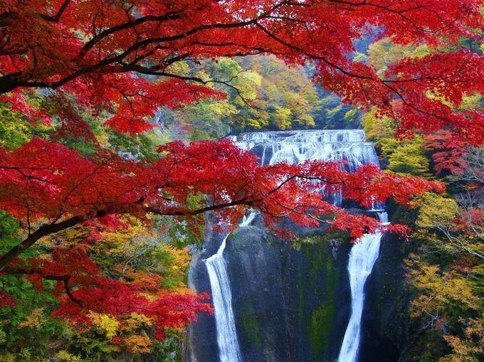 日本三名瀑(めいばく)のひとつに数えられている「袋田の滝」。なんと高さ120m、幅73mもあるそうです!