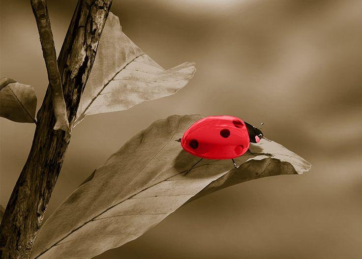 WallArt - Ladybird - Presentorium