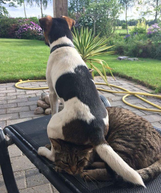 Прикольные картинки собаками и кошками, открытки фото