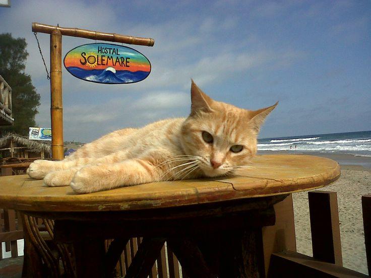 La mascota del Hostal Sole Mare