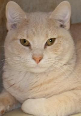 Adopt Gracie on Savannah chat, Cats, Pet adoption