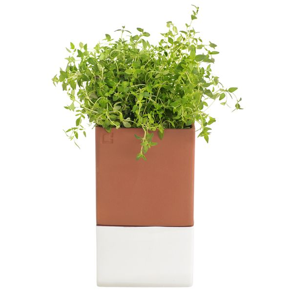 Grow your herbs in your kitchen - Cuit design.  http://www.akadwelling.com/Herb_Pot_Large?search=herb