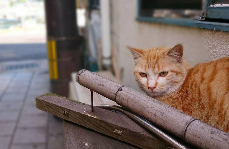 """おはようございます 昨日は雨の""""鞆の浦""""でした 今日は今は曇り空ですが晴れてくるようですよ  写真は鞆港桟橋近くの路地にいたネコです シャッターきる瞬間に目をそらされました(苦笑) ちょっとせつない思いをした粟村です(>_<"""") 鞆の浦とネコのpicがお好きな方でfacebookしてる方は僕の友人のページをオススメしますよー 鞆ヲ歩ケバ猫ニ当タル http://ift.tt/1WfeRWD  #鞆の浦 #鞆 #猫 #ねこ #鞆ねこ #cat #wildcat #鞆の浦路地シリーズ #路地 #alley #tomonoura #tomo #fukuyama #japan by amochinmi_awamura"""