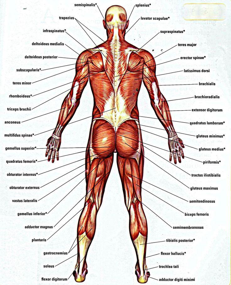 Human Bone Structure Back Bone Structure Lower Back Anatomy Human Body