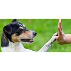 http://home4pet.com/Pet-Services/Pet-Trainers-Handlers/pet-training--at-door-step-package-