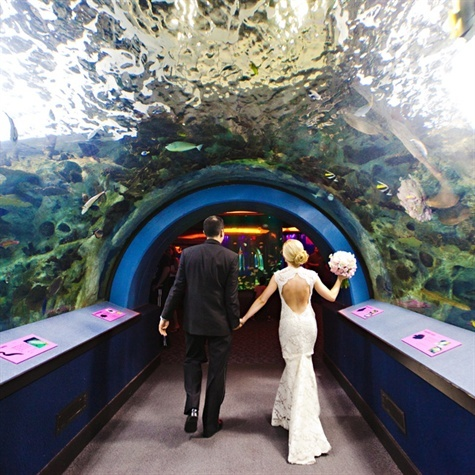 This has always been a major dream for me. When I get married it will be an aquarium wedding.