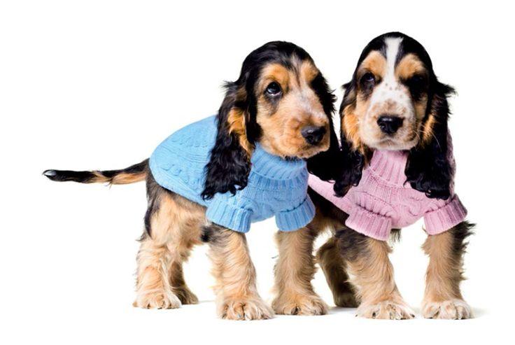 benetton dog sweaters | Dog coats | Pinterest