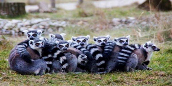 Στα πρόθυρα εξαφάνισης 6 στα 10 πρωτεύοντα θηλαστικά