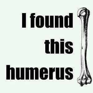 Humerus indeed.