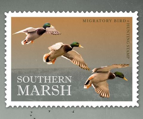 Mejores 251 imágenes de Duck Stamps en Pinterest | Federal, Patos y ...