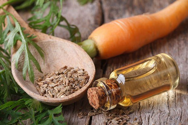 Image result for carrot seed essential oil