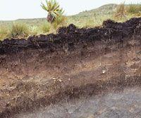 Perfil en el que se puede apreciar la huella de los diferentes cambios climáticos, de la actividad volcánica y de las fases de desarrollo de la vegetación, que contribuyeron en la formación de suelos de gran espesor.