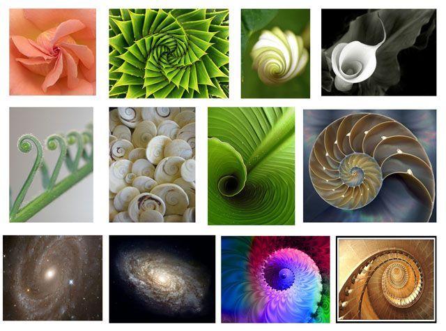 Resultado de imagen para fractales en la naturaleza