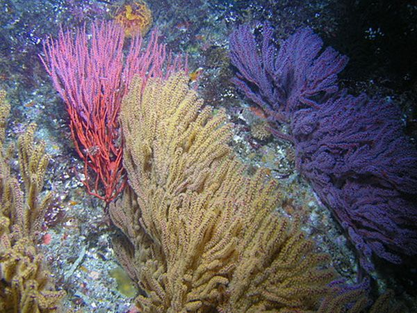 The Truly Impressive Array Of Colors Found In Underwater Coral